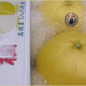 熊本の晩白柚♪