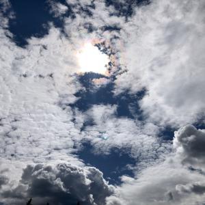 雲の中の虹🌈と🐿と、可愛い草花
