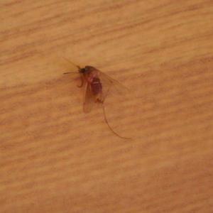 冬なのに・・・蚊が・・ワンコがいるのでフィラリアの心配をします。