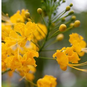 京都府立植物園の温室は神秘の塊