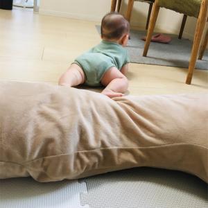 【GIFあり】アスリートな6ヶ月児がズリバイを完全習得するまでの軌跡【写真だらけ】