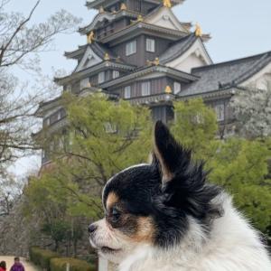 岡山城近くdogOKcafe