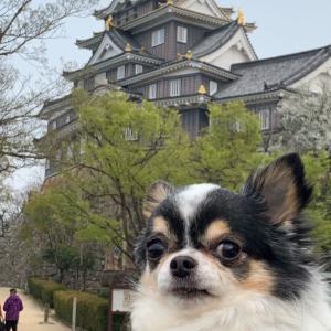 犬と行く岡山城