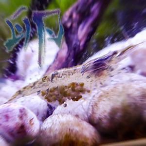 ミナミ沼① ~初・抱卵偏~