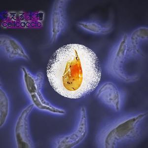ミナミ沼⑦ ~エビ大量死・悲劇の農薬水槽~