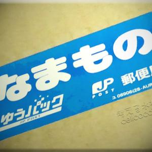 記事タイトルミナミ沼⑧ ~エビ50匹追加!~