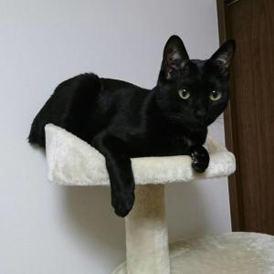 うちの猫3匹ニャンの紹介