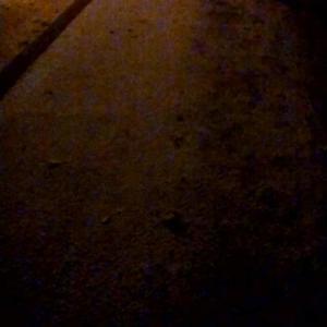 札幌市 中島公園 銀杏並木 20191107 / 昨年より冬が早い?
