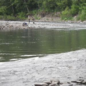 北海道 渚滑川の釣り 20210619 / 昨年爆釣した時期に来た