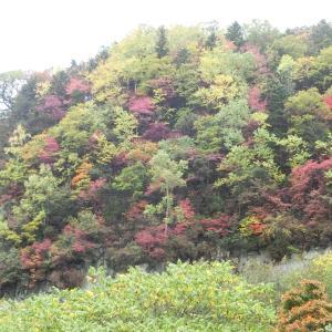 北海道 上川町 層雲峡 / 日本一早い紅葉を楽しみに