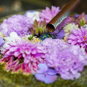 行田市「花手水week」を訪ねてきました (1):行田八幡神社の花手水【埼玉の花】