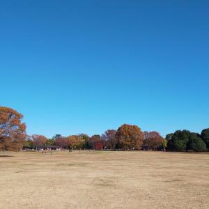 昭和記念公園さんぽ