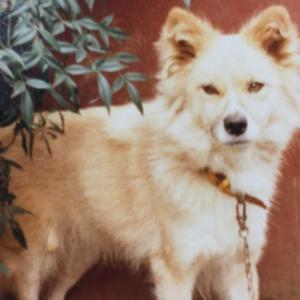 ミラクル犬