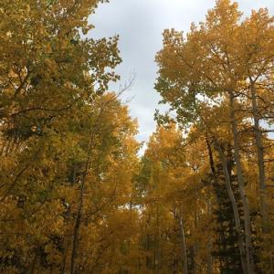 コロラドの紅葉で始まり薄毛・ハゲで終わる