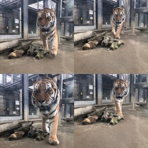 ひとり動物園