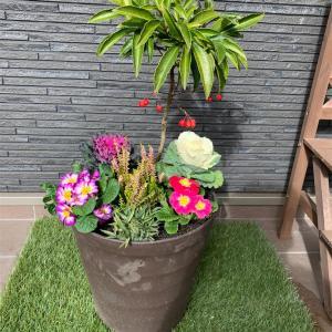 寄せ植えを作りました