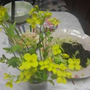 庭で花ランチ