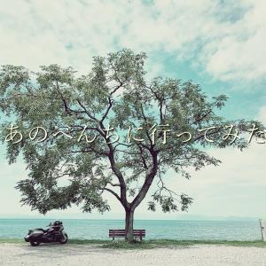 この木なんの木?あのベンチ。