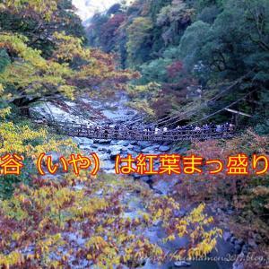 今年最後のお泊まりツーか?四国は祖谷渓へ行ってきた件。1/2