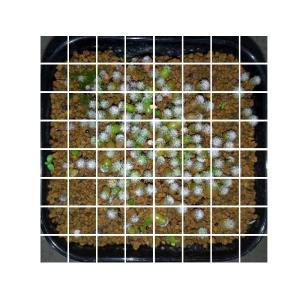 [matplotlib] 43. 画像を2n×2nに分割して表示
