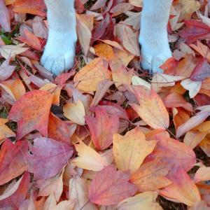 落ち葉ふみしめて:色々ver