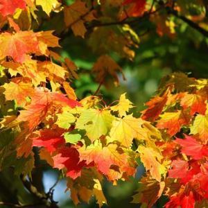 六義園紅葉の見頃・ライトアップ日程・混雑状況や見どころをご紹介!
