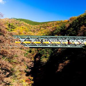 箱根の紅葉2019!登山鉄道や芦ノ湖、箱根神社の平和の鳥居周辺の見頃は?