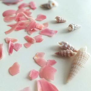 海からのギフト 桜貝を探して。