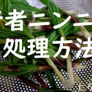 【初心者向け】キトビロ(行者ニンニク)の下処理方法・麺つゆ漬け