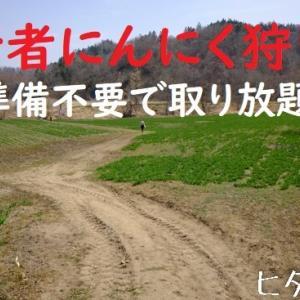 【日高町】人気の若林農園で行者ニンニク狩り。キロ売りで取り放題