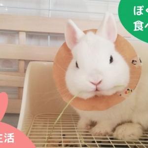 うさぎが牧草を食べない理由…食べたくても食べられない?!