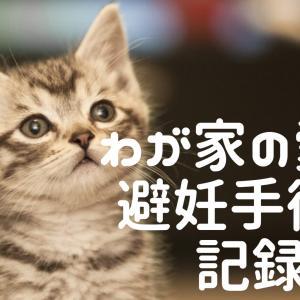 猫の避妊手術|手術前日から手術後の回復までの記録