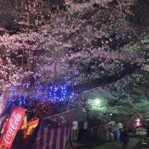 2019年 桜 総まとめ