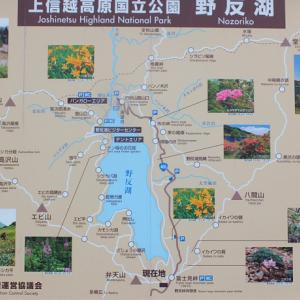 令和元年 野反湖周辺の花巡り2