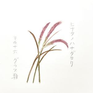 仲秋の名月に飾ろうススキなど グラス類「ヒナタノハナダヨリ」