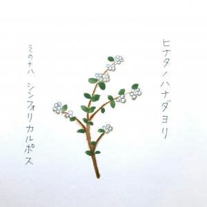 ぷにぷにのかわいい秋の実「シンフォリカルポス」~ヒナタノハナダヨリ その18