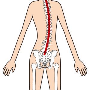 大人の側弯症とクラップ体操:ストレッチポールとストレッチ動画