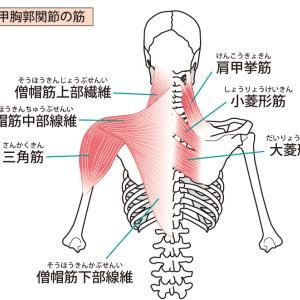 僧帽筋のこりや痛みをなくす方法!筋トレとストレッチ・トレーニングを中心に紹介