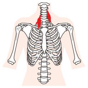 斜角筋を緩めて首肩の不調を吹き飛ばそう!筋トレとストレッチと斜角筋症候群について