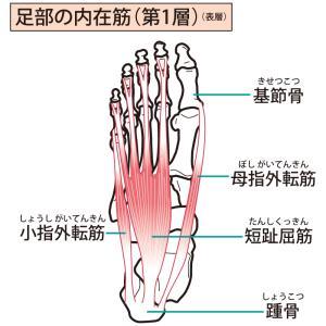 身体の不調には外腹斜筋の筋トレ!意外なあの筋肉との関係