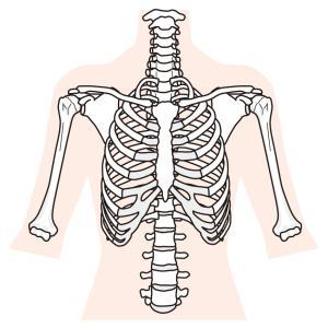 深呼吸して横腹が痛い原因は肋間筋にあった!?肋間筋のストレッチや緩め方について
