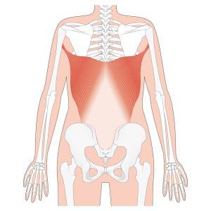 腰痛に新提案!ドローインする前に胸腰筋膜のストレッチをしよう!
