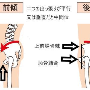 浮き輪肉をごっそり根こそぎ落とす筋トレとストレッチ!重要なのは股関節と骨盤です