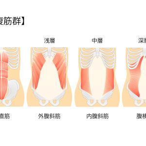 最も効率的な内腹斜筋の筋トレは!?お腹痩せには欠かせません!骨盤の安定にも関係
