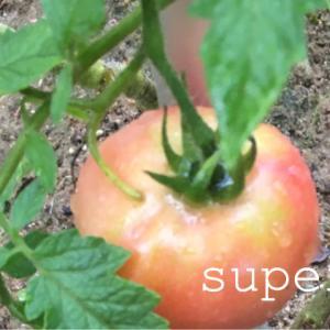 家庭菜園初心者に一番大事なこと。粘土質でも野菜は育つのか。