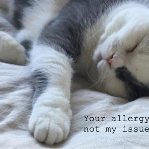 猫アレルギーでも猫と暮らせる3つの必須アイテム