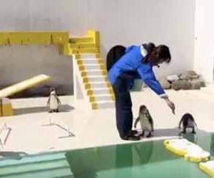 おたる水族館の自由すぎるゆるいペンギンショーがカオスな動画