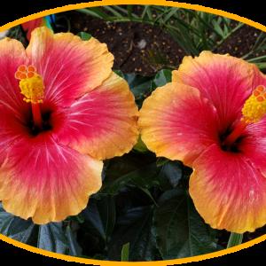 お庭にお花✨元気がでる花(^-^)/リラックスする花(*^^*)!施工例・外構、エクステリア✨