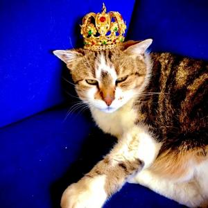 猫の王様~