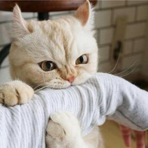 ネコが大好きで家族に迎えたいけれど、色々考えてしまって一歩踏み出せない